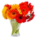 Gerbera flowers in glass vase Royalty Free Stock Photo