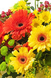 Gerbera flowers isolated on white background. Stock Photo