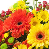 Gerbera flowers isolated on white background. Royalty Free Stock Photos