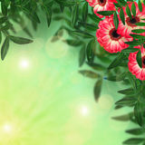 Gerbera flowers and leaves on blurred background Stock Image