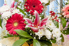 Gerbera flowers and lily Stock Images