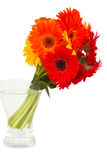Gerbera flowers posy  in vase Royalty Free Stock Photo