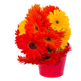 Gerbera flowers in pot Royalty Free Stock Photo