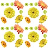 Gerbera flowers-seamless pattern on white background, yellow, or stock illustration