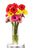 Gerbera flowers in vase isolated over white Royalty Free Stock Photos