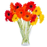 Gerbera flowers in vase Royalty Free Stock Image