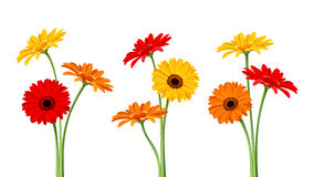 Free Gerbera Flowers. Vector Illustration. Royalty Free Stock Photo - 49591815