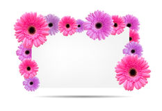 Gerbera flowers with white card template Royalty Free Stock Images