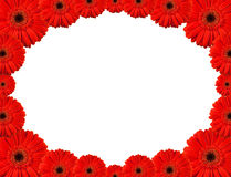 Gerbera Frame Royalty Free Stock Image