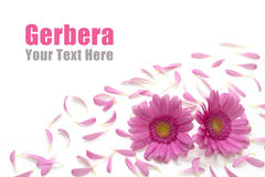 Gerbera frame Stock Photos