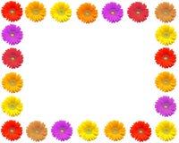 Gerbera frame. Frame of gerbera flowers Stock Photography