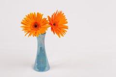 Gerbera. S flower color orange in glass Stock Image