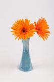 Gerbera. S flower color orange in glass Royalty Free Stock Image