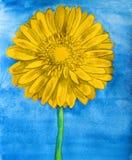 Gerbera gialla sul blu Fotografie Stock