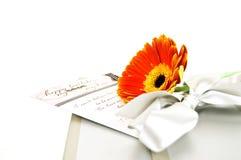 Gerbera gift Stock Images
