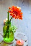 Gerbera in glass bottle Stock Photos
