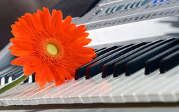 Gerbera and grand piano keys. Royalty Free Stock Images
