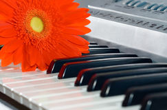 Gerbera and grand piano keys. Stock Photo