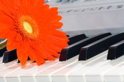 Gerbera and grand piano keys. Royalty Free Stock Photography