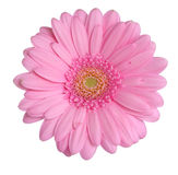 Gerbera head Stock Photos