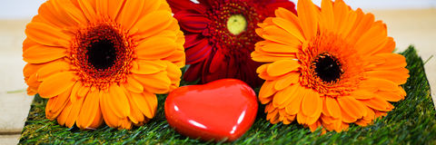 Gerbera with heart, symbolic. Spring, beginning of spring Stock Photography
