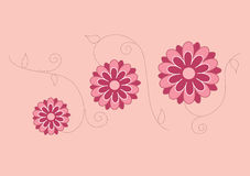 Gerbera ilustrado cor-de-rosa vermelho Imagens de Stock