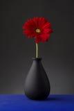 Gerbera im Vase Stockfoto