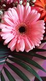 Gerbera. Just beautiful flowers Stock Images