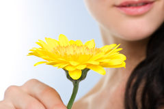 Gerbera kept by woman Royalty Free Stock Photography