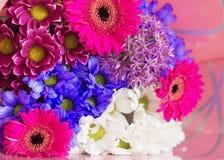 Gerbera kleurt relaxe Royalty-vrije Stock Afbeeldingen