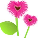 Gerbera from love Royalty Free Stock Photos