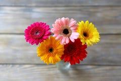Gerbera multicolore frais image libre de droits