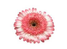 Gerbera-ontwerp element stock foto