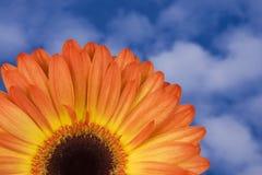 Gerbera orange avec le ciel Photographie stock