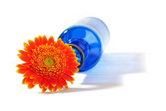 Gerbera orange dans le vase bleu sur le fond blanc Photos libres de droits