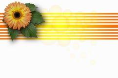 Gerbera orange de grande fleur sur des feuilles avec les cercles transparents Image stock