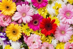 Chrysanthemum, gerbera and roses Stock Images