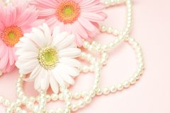 Gerbera and pearl Stock Image