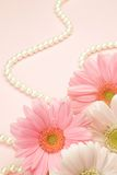 Gerbera and pearl Stock Photography