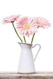 Gerbera pink daisy flower Royalty Free Stock Photo