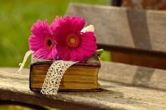 Gerbera, Pink, Flower, Blossom Royalty Free Stock Image