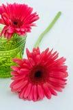 Gerbera różowi kwiaty Zdjęcia Royalty Free