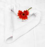 gerbera ręcznik Obraz Royalty Free