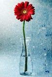 Gerbera rojo Daisy Flower Vase Water Texture Fotografía de archivo