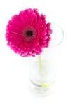 Gerbera rojo en un florero de cristal Foto de archivo