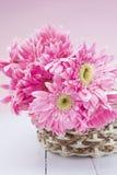 Gerbera rosado en cesta con cierre rosado del fondo para arriba Fotografía de archivo libre de regalías