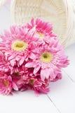 Gerbera rosado en cesta con el fondo rosado Fotografía de archivo libre de regalías