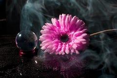 Gerbera rosado en un fondo negro con descensos del agua ilustración del vector