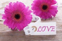 Gerbera rose de ressort, label, amour des textes Photos stock