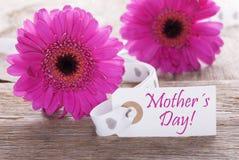 Gerbera rose de ressort, label, jour de mères des textes Images stock